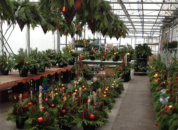 A Thing of Beauty Greenhouse with Christmas urns