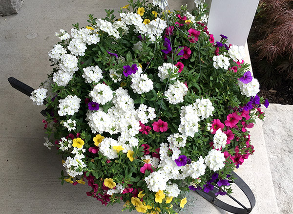 A thing of beauty mixed planter pot white accent