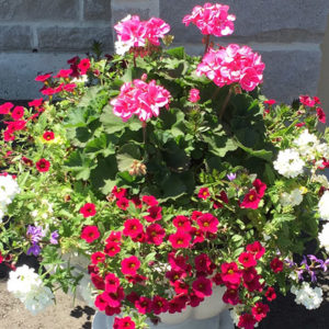 13″ Planted Pot – Part Sun / Full Sun