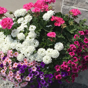 20″ Planted Pot – Part Sun / Full Sun