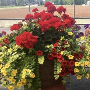 """13"""" Planter Pot (Full Sun)"""