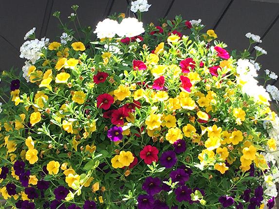 12 inch bells planter