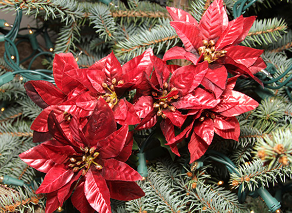 A thing of beauty christmas planter close up